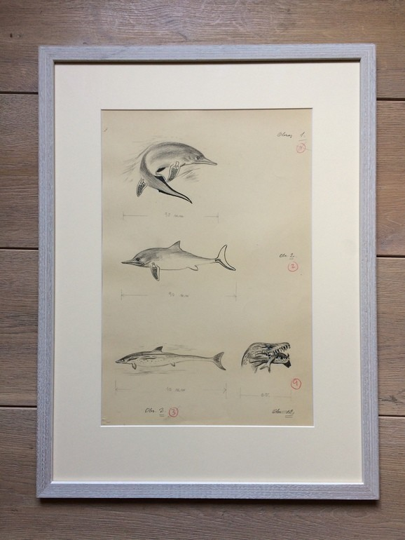 Zdeněk Burian, Pravěcí mořští plazi, ilustrace, Retro Gallery