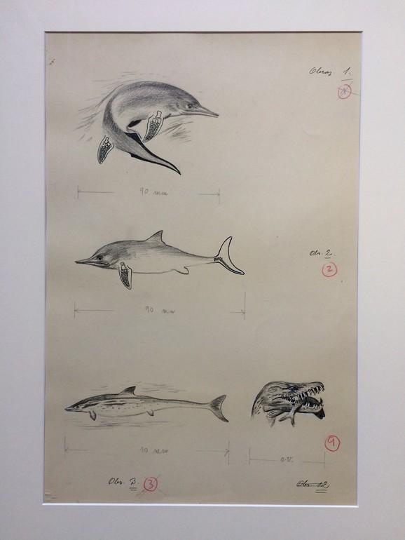 Zdeněk Burian, Ilustrace, Pravěcí mořští plazi, č.2